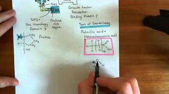 Receptor Tyrosine Kinases Part 4 - YouTube