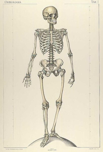 95 best anatomia images on Pinterest | Anatomía humana, El cuerpo ...