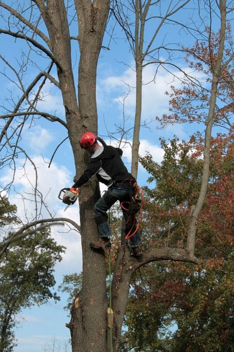 Services In Tree Cutting and Tree Pruning Johns Creek