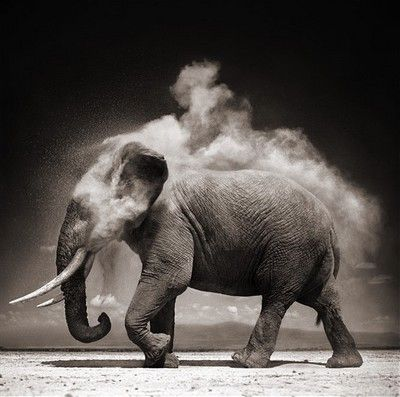 Became something with wisdom. (l'éléphant est une obsession).