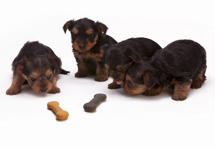 Download this free photo here www.picmelon.com #freestockphoto #freephoto #freebie /// Puppies Looking at the Bones | picmelon