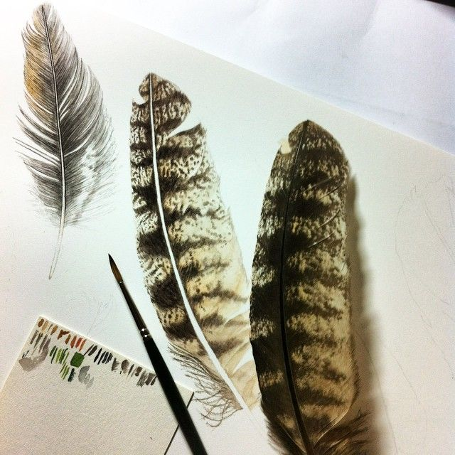 #feather no.7 is the most #challenging to #paint #intricate #detail #art_we_inspire