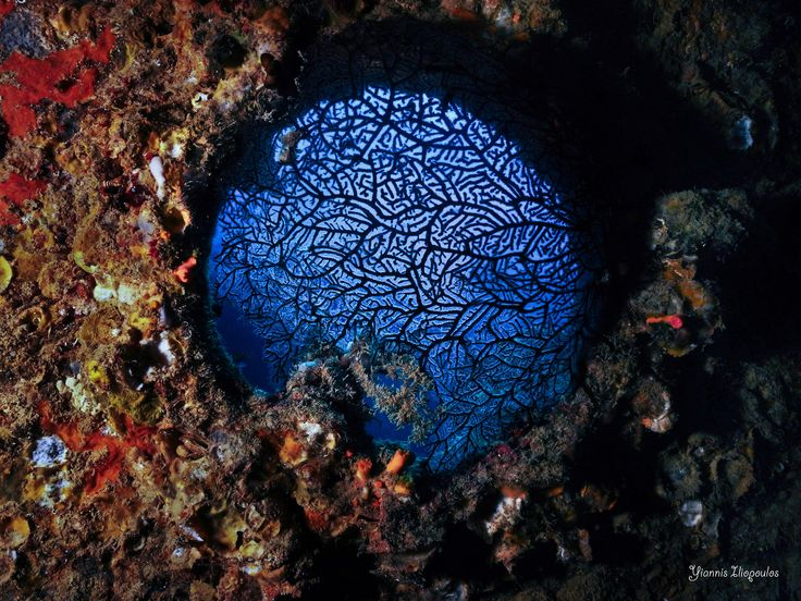 Underwater Ship Wreck diving | Window to a beautiful world... | Underwater Photography by Yiannis Iliopoulos