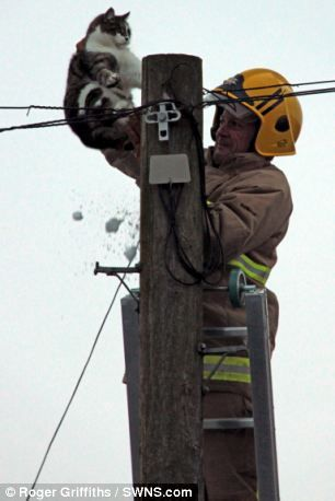 Firefighter rescues cat from 40ft pole