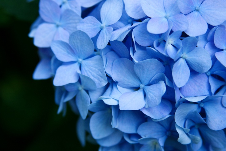 blues - photo by: jessika gosenBlue Color