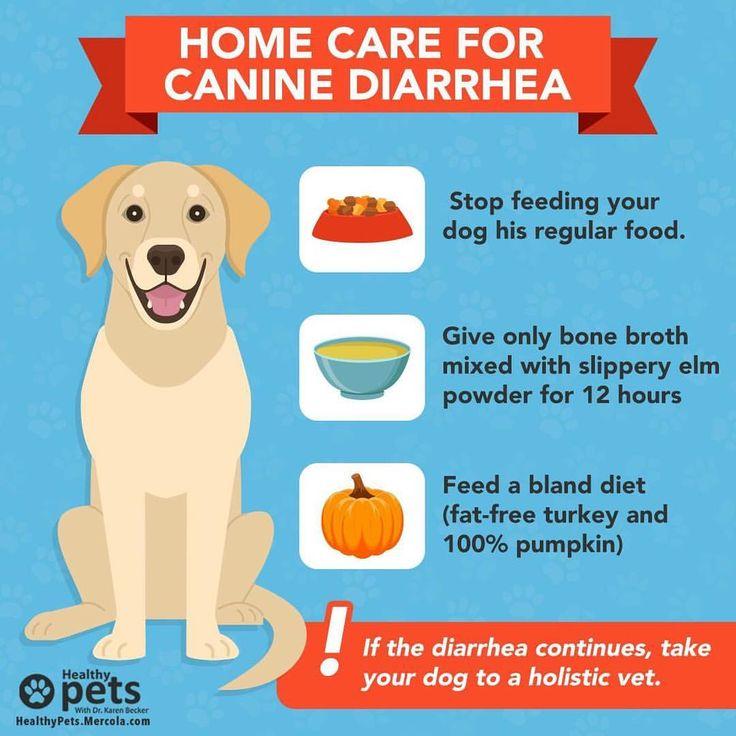 #Doggie diarrhea – unfortunately it's one of the common ...