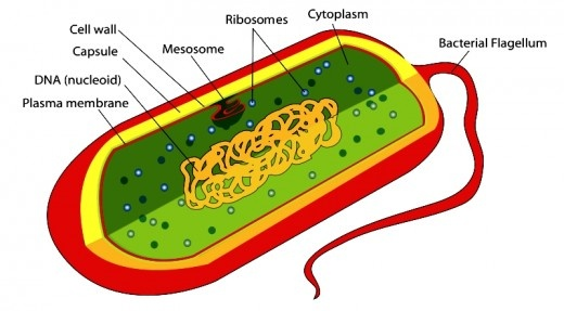Structure of a living cell