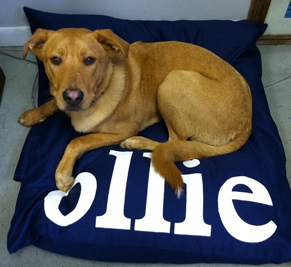 Ollie such a sweet dog. Denim Soft Durable Dog Bed Duvet Cover Personalized by Furlap, $58.00