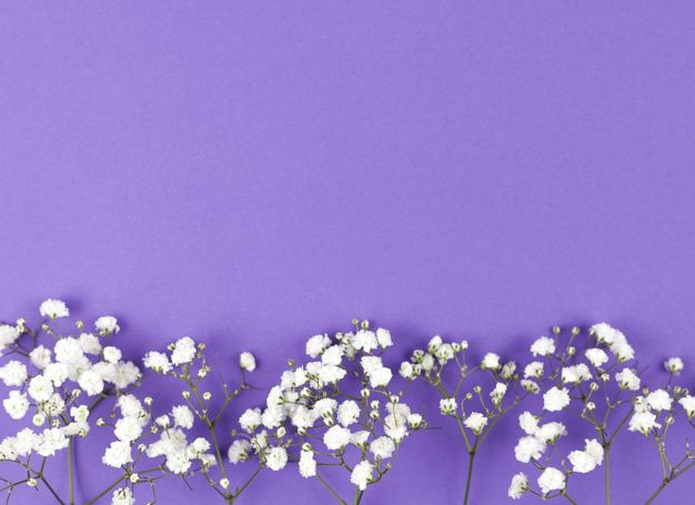 Download Baby S Breath Flower At The Bottom Of Purple Backdrop For Free Flower Doodles Flower Backgrounds Babys Breath