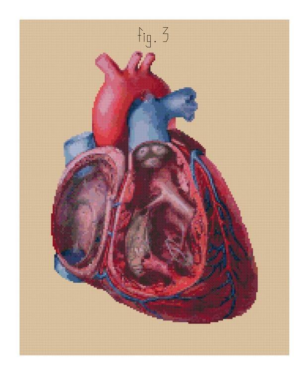 Antique Anatomical Heart Cut-Away cross stitch pattern PDF. $5.99, via Etsy.