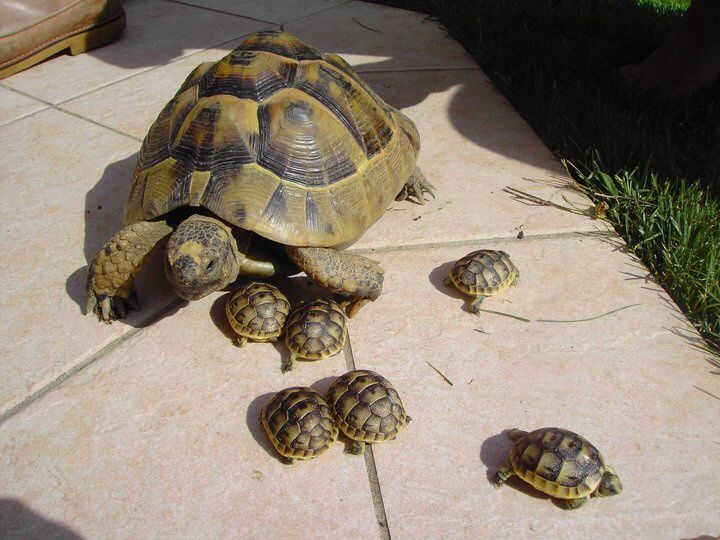 Best Images Turtles Pet House Suggestions Turtle Tortoise
