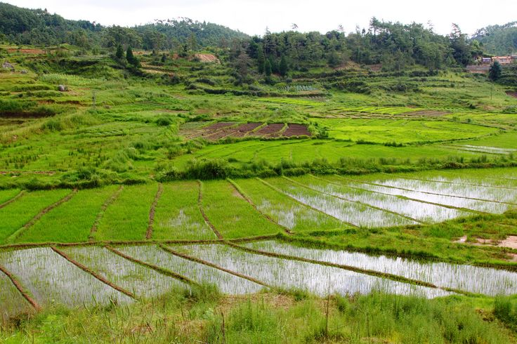 https://flic.kr/p/aYXdEB | 0896 Shillong to Cherrapunjee, India | Cherrapunji  (alternative spellings are Cherrapunjee and Charrapunji), is a subdivisional town in the East Khasi Hills district in the Indian state of Meghalaya. It is credited as being the second wettest place on Earth. However, nearby Mawsynram currently holds that record.  It is the traditional capital of a hima (Khasi tribal chieftainship constituting a petty state) known as Sohra or Churra.  The original name for this…