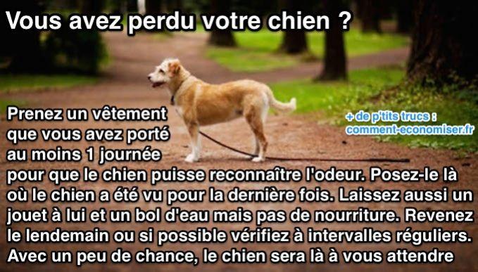 Aussi incroyable que cela puisse paraître, cette astuce a marché pour de nombreuses personnes à la recherche de leur chien disparu.  Découvrez l'astuce ici : http://www.comment-economiser.fr/retrouver-son-chien-perdu.html?utm_content=buffer0ed22&utm_medium=social&utm_source=pinterest.com&utm_campaign=buffer