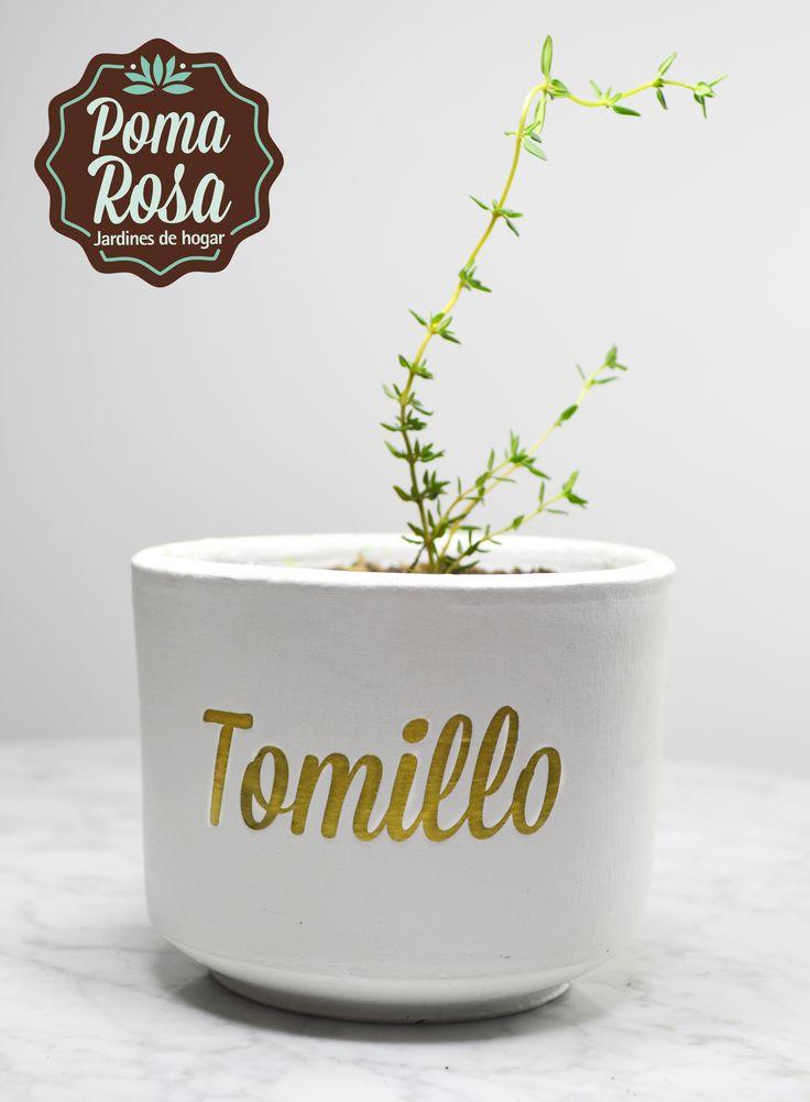 Tu huerta en casa!  ¡Qué rico unas deliciosas pastas con unas hojitas frescas de Tomillo!  Precio: $15.000
