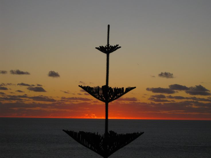 Norfolk Island Pine Tree and stunning sunset.