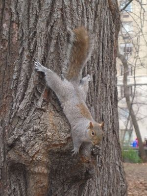 Homemade Squirrel Repellent for Trees http://ebay.to/1RDudAQ
