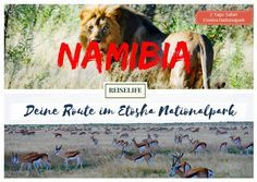 Deine Selbstfahrer Route im Etosha Nationalpark Namibia, was für ein wunderschönes afrikanisches Land. Eine Safari im Etosha Nationalpark darf dabei natürlich nicht fehlen. Der Nationalpark eignet sich perfekt für Selbstfahrer. Alles ist gut organisiert, die Straßen sind relativ gut zu befahren und es gibt gute Übernachtungsmöglichkeiten direkt im Park. Flamingos in den frühen Morgenstunden Dieser