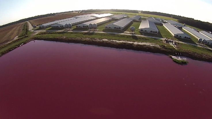 In eastern North Carolina, residents are battling with one of the state's largest industries: hog farms. Last week, North Carolina lawmakers passed House Bill 467, which limits the damages that residents could collect against hog farms. The billion-dollar industry is primarily clustered in the eastern part of the state, where hog farms collect billions of gallons of untreated pig feces and urine in what are essentially cesspools, then dispose of the waste by spraying it into the air…