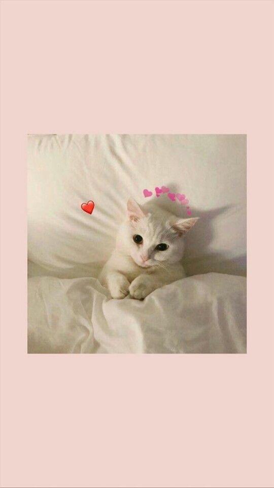 Gambar Kucing Oren Aesthetic godean.web.id