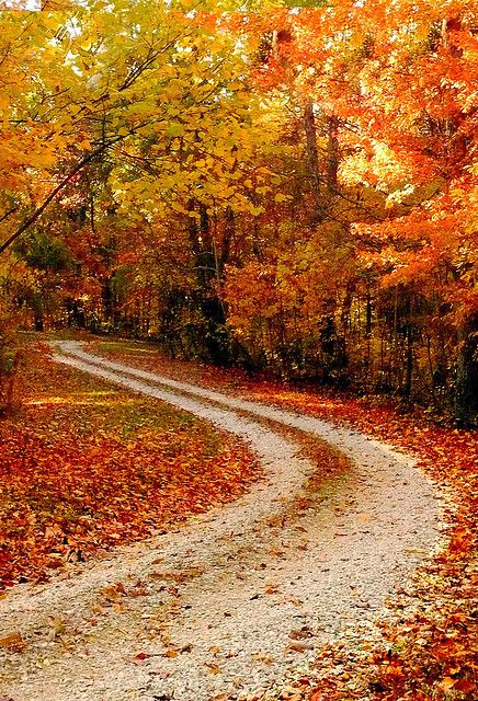 This is on my bucket list.... To drive down an old country road in the fall and have someone take a picture behind you so you can see all the leaves flying up... I know I'm weird!! Lol
