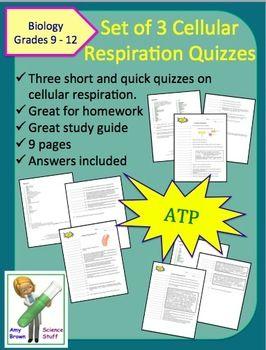 Cellular Respiration Quizzes - Set of 3