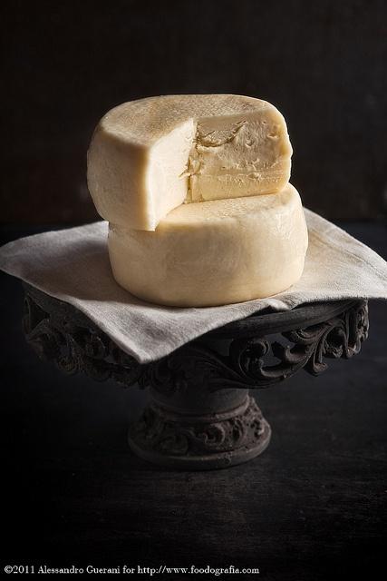 Caciotta cheese