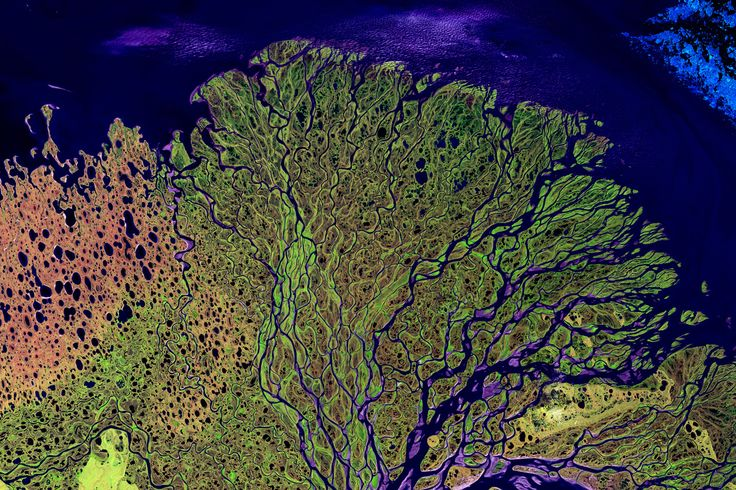 Lena Delta, Siberia:  one of the last truly wild places.