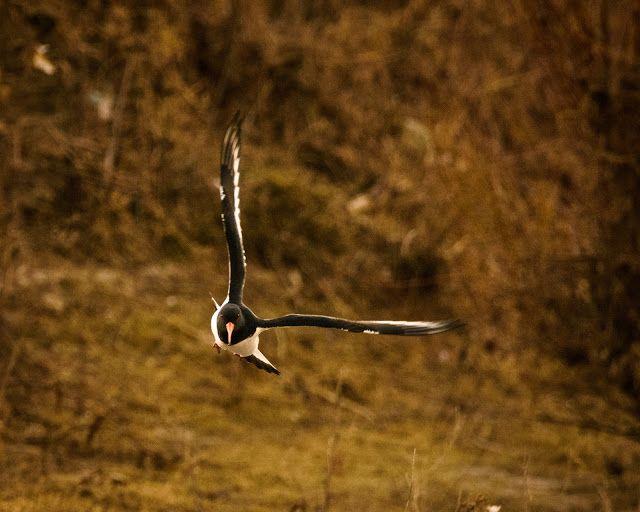 Claes`s Photo blog: cold flight