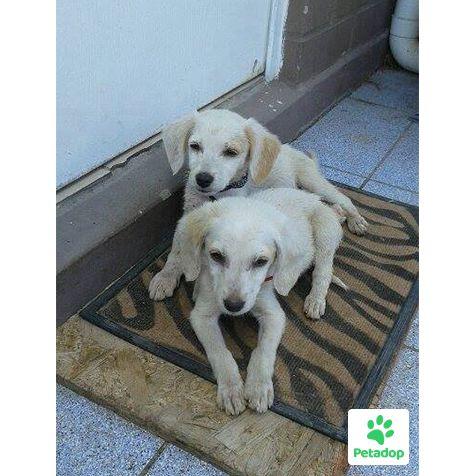 Cachorros recién rescatados, en San Bernardo.Buscan hogar.  Son juguetones, y necesitan de una familia que los cuide. Que esperas?  Contáctanos y te ayudamos en el proceso de adopción.  #Santiago #Chile #Adopcion #Mascotas