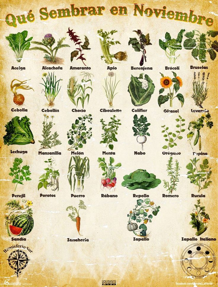 Les traemos este útil calendario de las Siembras del mes de Noviembre, además de fichas con información específica de cada planta que po... #huerta