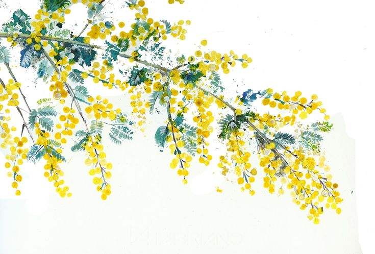 Natalie's Sketchbook: Painting nature - Jacqui's botanical art