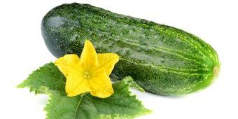 Převratná studie: Okurky jsou zázračný lék! Pomůžou proti cukrovce i kocovině - Nová Země 2010