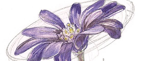 How to paint flowers in watercolours