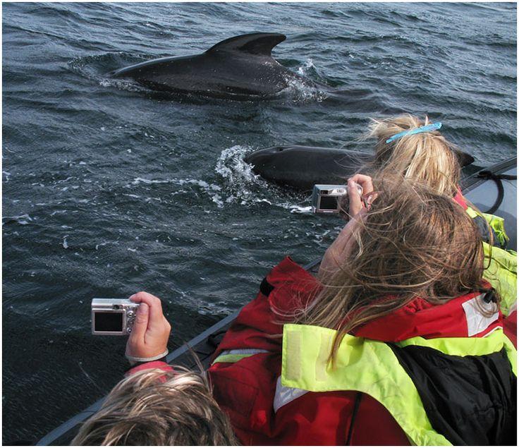 Whale Watching in Chéticamp, Cape Breton