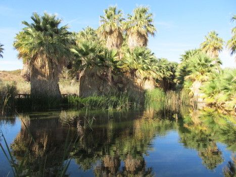 Where to hike in Palm Springs, Palm Desert, Joshua Tree National Park & nearby (Photos)