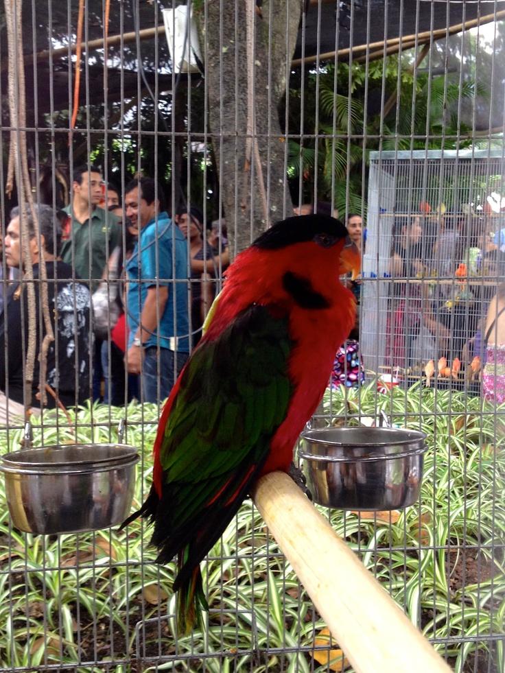 El loro jardinero y cantidad de especies de pájaros también estuvieron presentes en la 19º versión de la exposición.