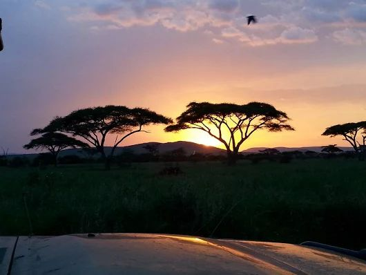 Experience the beauty of sunset on your safari with us. #safari #plainsofsere...