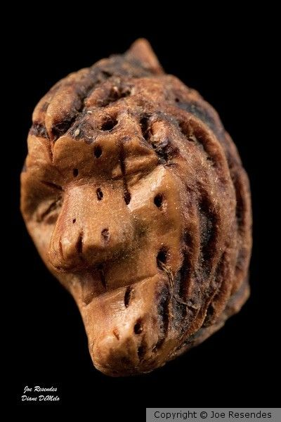10 Best Images About Peach Pit Carvings On Pinterest