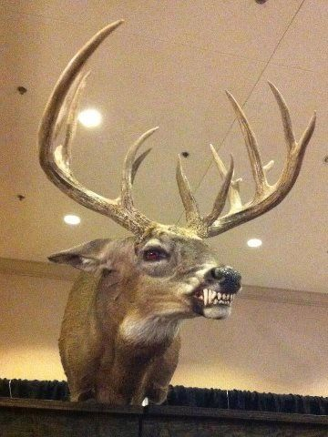 Hehe, hunting might be a bit different if the deer had teeth like this! Scary cool taxidermy here. :)
