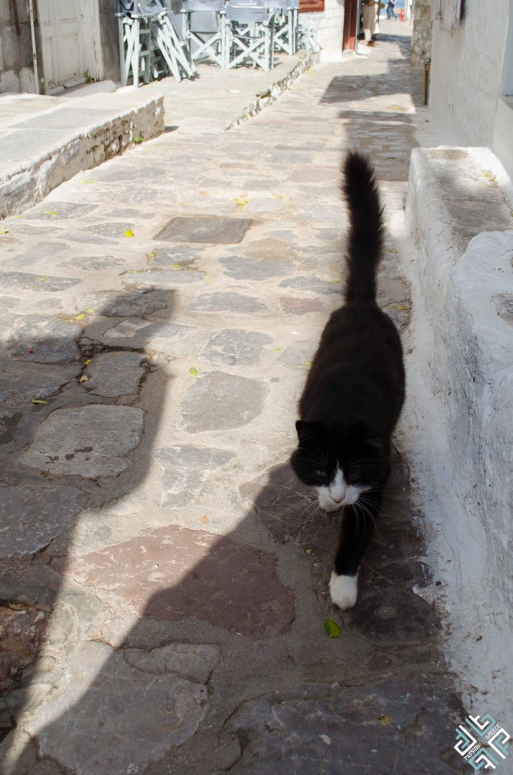 Greek cat on the island of Hydra #Greece #passionforgreece #Hydra #cat