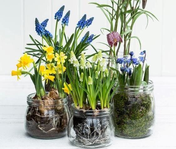Løkplanter - våren på forskudd!