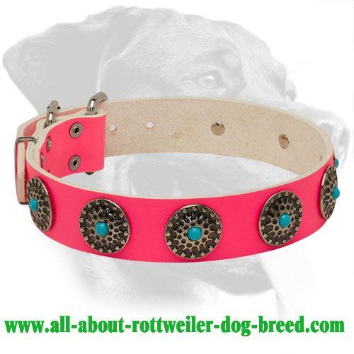 554 Best Ideas About Awesome Rottweiler Collars On