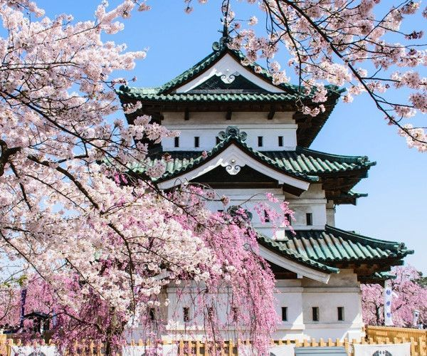 Best Cherry Blossom Festivals Viewing Locations Jrailpass Cherry Blossom Festival Japan Travel Winter In Japan