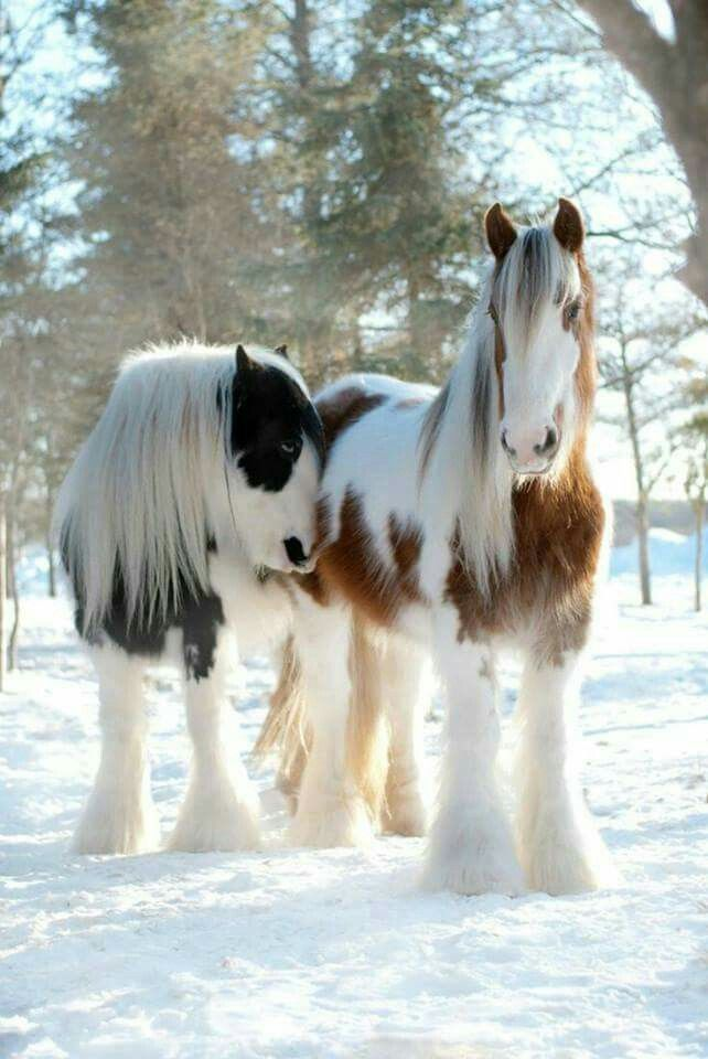 Awww! How cute are they!! https://feelmyvibe.com/collections/all/horse-paintings