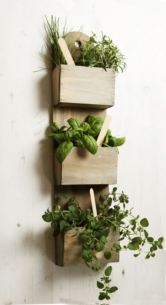 Wall mounted wooden kitchen herb planter kit with seeds indoor garden plant pot gardens herb - Wall mounted planters outdoor ...