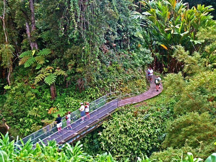 Trail to Akaka Falls, Hamakua Coast, Big Island of Hawaiʻi