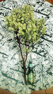 15 Premium Manzanita Branches Centerpieces Fresh Cut 30-36 inches