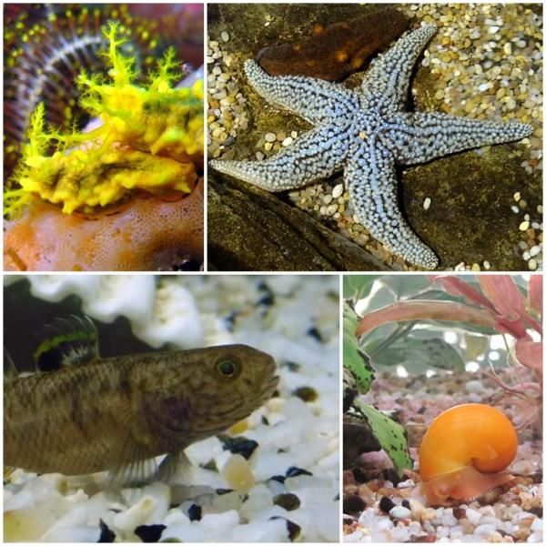 Animales Que Limpian El Acuario Acuario Agua Salada Peces De Agua Salada Acuario Agua Dulce