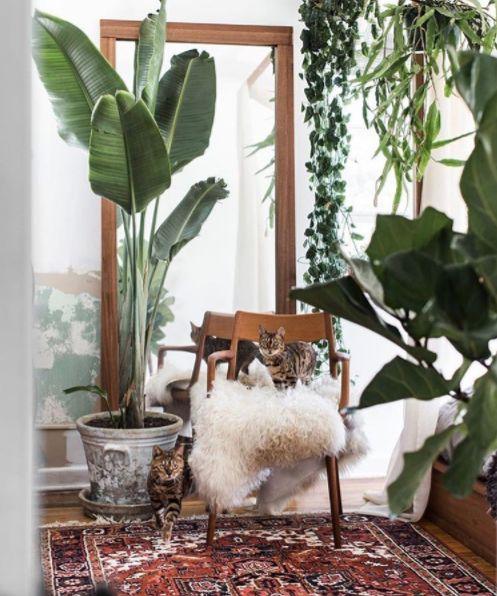 Urban Jungle Rug: 20+ Beste Ideeën Over Perzisch Tapijt Op Pinterest