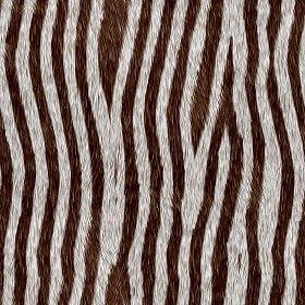 Textures Texture seamless | Faux fake fur animal texture seamless 09583 | Textures - MATERIALS - FUR ANIMAL | Sketchuptexture